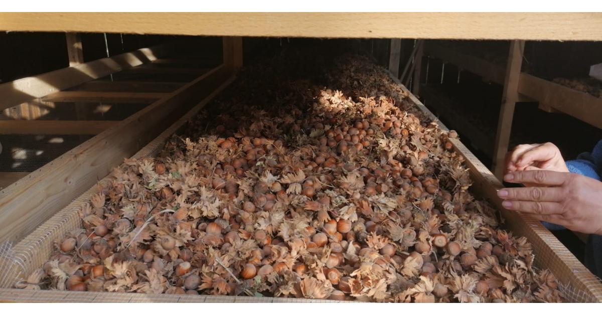 Cum să ai o afacere cu trufe și alune: care este investiția și când scoți profitul. Exemplul Il Tartufo din Alba Iulia
