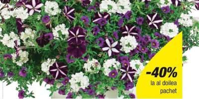 Mix Passionn flori suspendate asortate