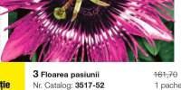 Floarea pasiunii Purple Rain