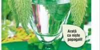 Asclepias syriaca
