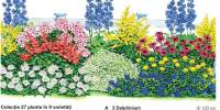 Colectie 27 plante in 9 varietati
