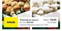 Ciuperci frantuzesti/albe