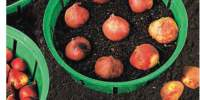 Cosuri pentru plantare