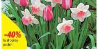 Lalele Mistress + Narcise Pink Pride