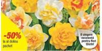 Mix narcise cu flori batute
