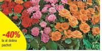 Mix trandafiri acoperitori