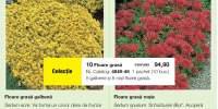 Floare grada galbena/rosie